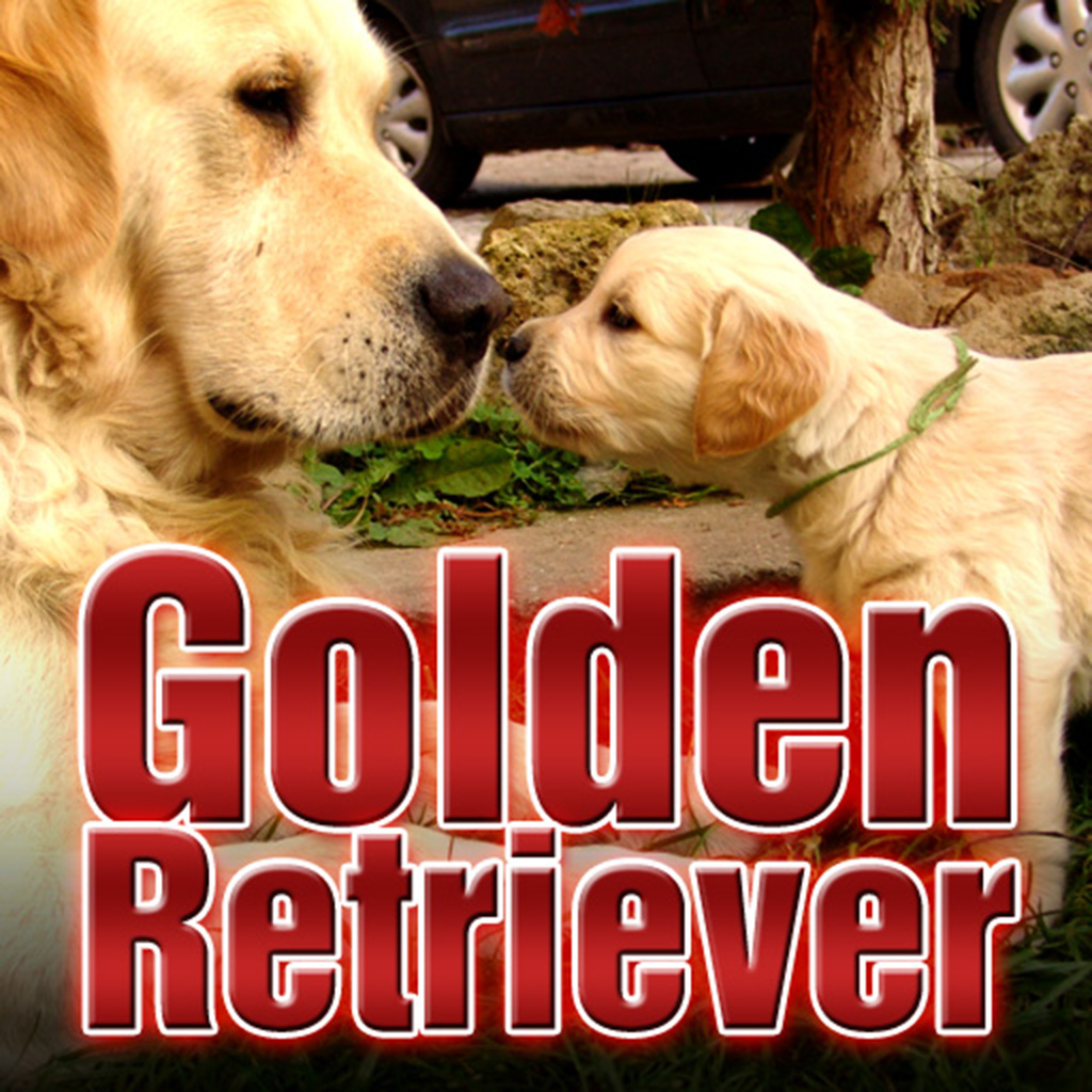 Golden Retriever Dog Free Free Android App Market